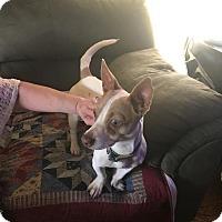 Adopt A Pet :: Lucy - Salem, OR
