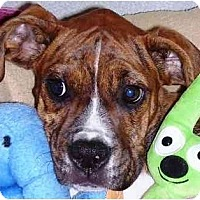 Adopt A Pet :: Izzy - Sunderland, MA