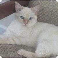 Adopt A Pet :: Ali/Kit - Port Republic, MD