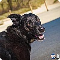 Adopt A Pet :: Winston - Schererville, IN