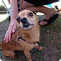 Adopt A Pet :: Rio - S. Pasedena, FL