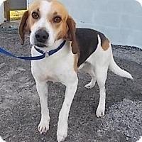 Adopt A Pet :: Trevor - Williston, FL