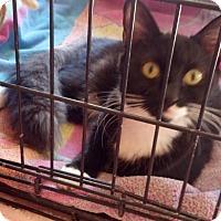 Adopt A Pet :: Freeway Frannie - Scottsdale, AZ