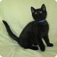 Adopt A Pet :: Paxton - Powell, OH