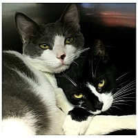 Adopt A Pet :: Tulip & Caroline - Forked River, NJ
