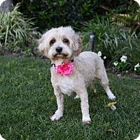 Adopt A Pet :: LESA - Newport Beach, CA