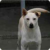 Adopt A Pet :: Dollar - Alexandria, VA
