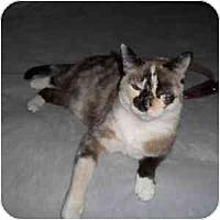 Adopt A Pet :: Lelah - Phoenix, AZ
