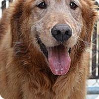 Adopt A Pet :: Mason - White River Junction, VT