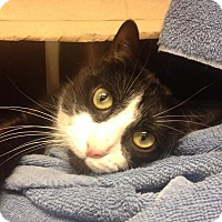 Adopt A Pet :: Dexter - Chicago, IL
