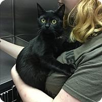 Adopt A Pet :: Zendaya - Richboro, PA