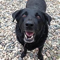 Adopt A Pet :: Fanny - Phoenix, AZ