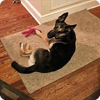 Adopt A Pet :: Thor 5068 - Sterling, VA