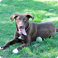 Adopt A Pet :: Rayne - Westerly, RI