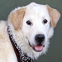 Adopt A Pet :: Yorbi - Renfrew, PA
