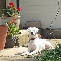 Adopt A Pet :: Geno - Columbus, OH