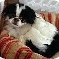 Adopt A Pet :: Riley - Aurora, CO