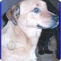 Adopt A Pet :: Starr - Hamilton, ON