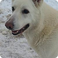 Adopt A Pet :: MOE - New Windsor, NY