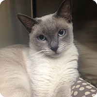 Adopt A Pet :: Meerkat - Newport Beach, CA