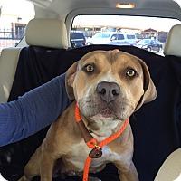 Adopt A Pet :: Mama Mia - West Hills, CA