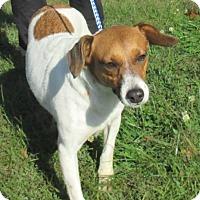 Adopt A Pet :: Princess - Reeds Spring, MO