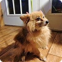 Adopt A Pet :: felecity - Crump, TN