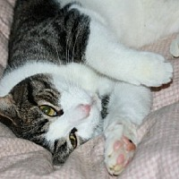 Adopt A Pet :: Jesse - Ephrata, PA