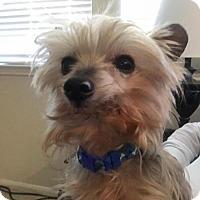 Adopt A Pet :: Romeo - Spring, TX