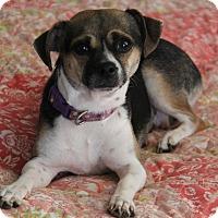 Adopt A Pet :: Rosie - Yuba City, CA