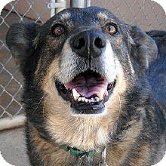 Shepherd (Unknown Type) Mix Dog for adoption in Phoenix, Arizona - Scarlet