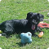 Adopt A Pet :: Diamond and Devon - Fulton, NY