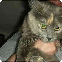 Adopt A Pet :: Jakkotta - Washington Terrace, UT