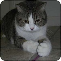 Adopt A Pet :: Katie Bug - Phoenix, AZ