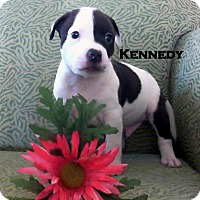 Adopt A Pet :: KENNEDY - Higley, AZ