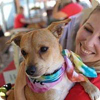 Adopt A Pet :: COLLIE - Ojai, CA