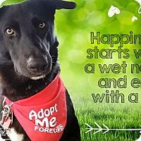 Adopt A Pet :: Millie - West Hartford, CT