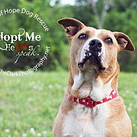 Pit Bull Terrier Mix Dog for adoption in Broken Arrow, Oklahoma - Dena