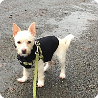 Adopt A Pet :: Zoe Bowie - San Francisco, CA