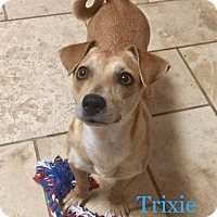 Adopt A Pet :: Trixie - Spring, TX
