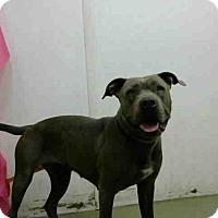 Adopt A Pet :: URGENT 4/29 @ DEVORE - San Bernardino, CA