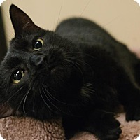 Adopt A Pet :: Anya - Chicago, IL