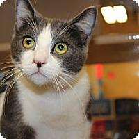 Adopt A Pet :: Beckett - Santa Monica, CA