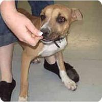 Adopt A Pet :: Megan - Scottsdale, AZ