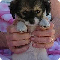 Adopt A Pet :: Peaches - ORANGE COUNTY, CA