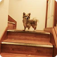Adopt A Pet :: Sofie - Seattle, WA