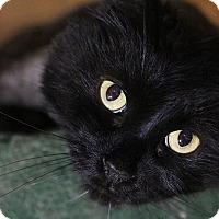 Adopt A Pet :: Be-Bop - Columbia, MD