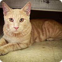 Adopt A Pet :: Calvin - Trevose, PA
