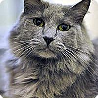 Adopt A Pet :: Jake - Davis, CA