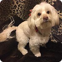 Adopt A Pet :: HAVEN - Los Angeles, CA